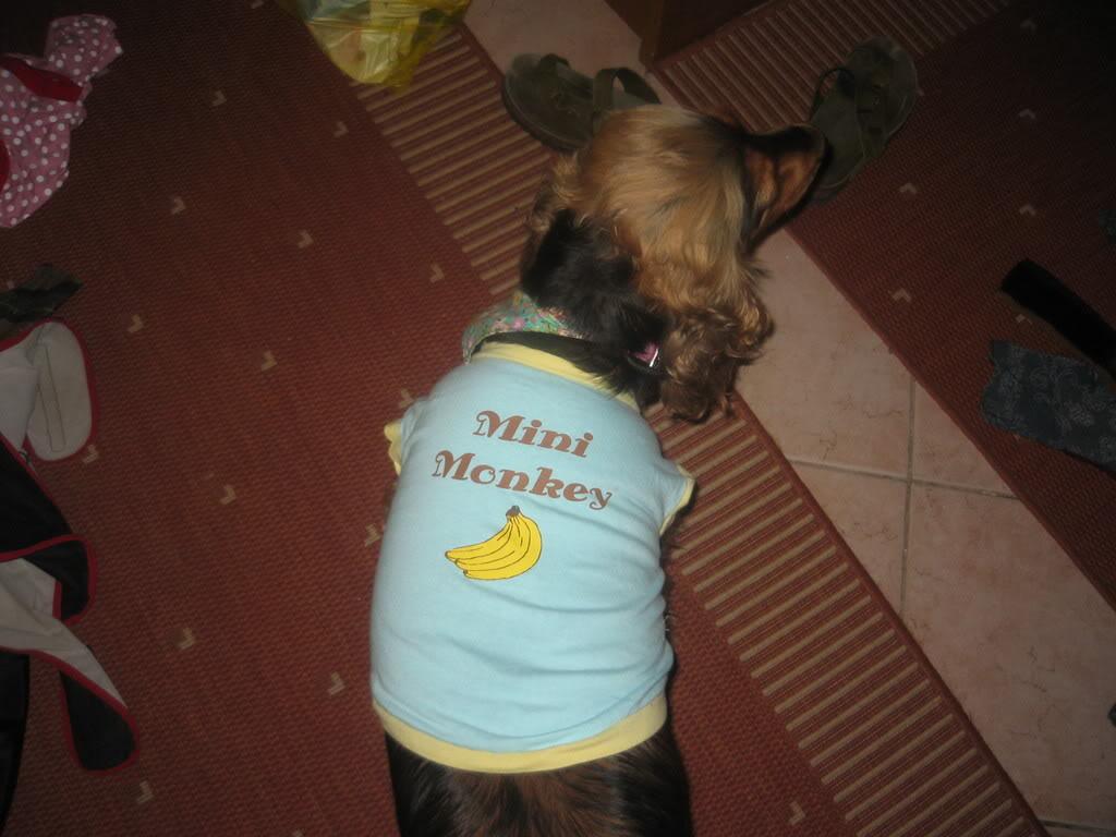 Odječa za pse Kaputici007