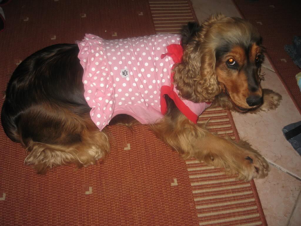Odječa za pse Kaputici008