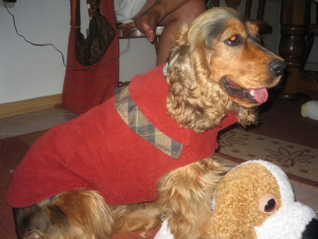 Odječa za pse Kaputici009