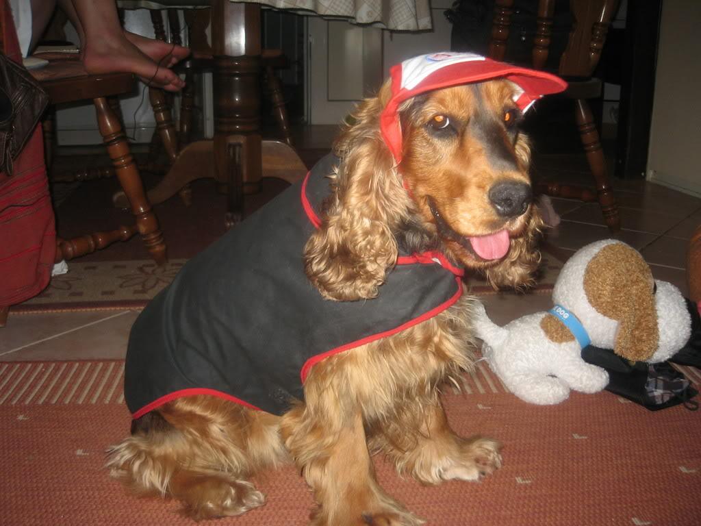 Odječa za pse Kaputici011