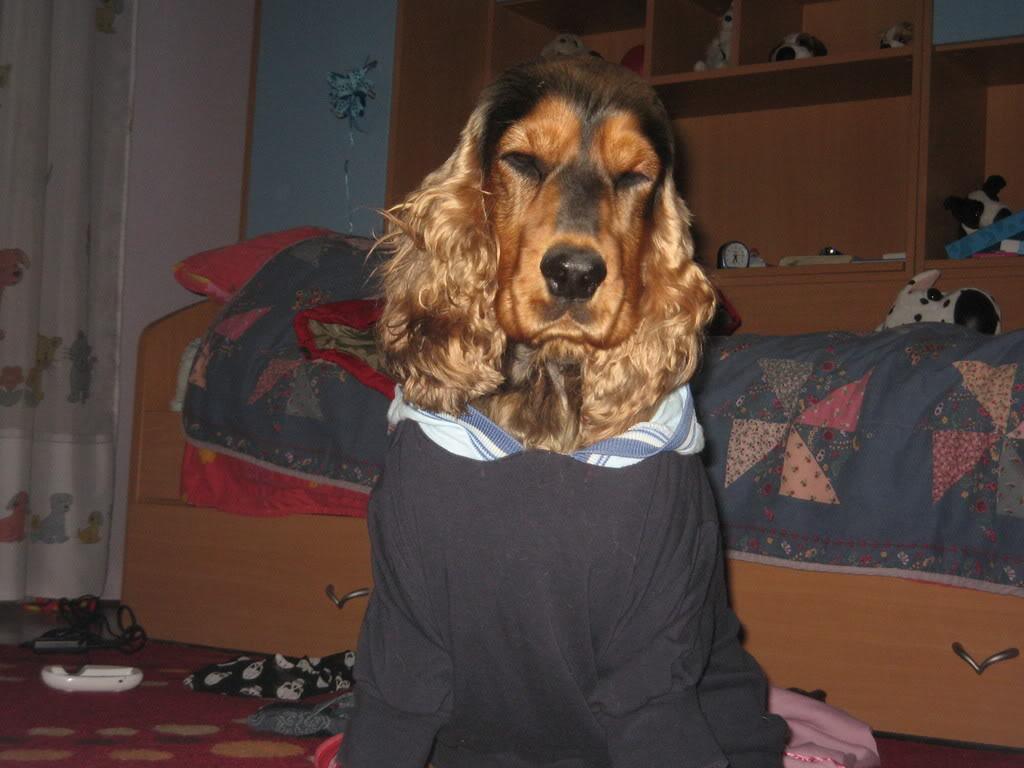 Odječa za pse Kucaammy007