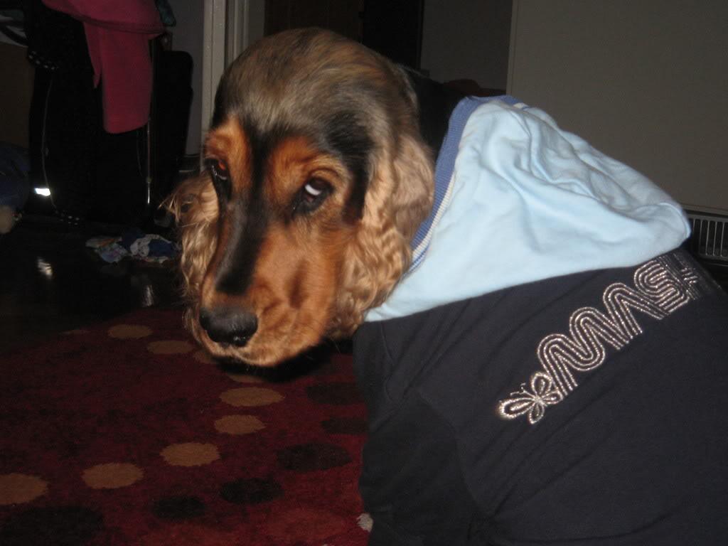 Odječa za pse Kucaammy009