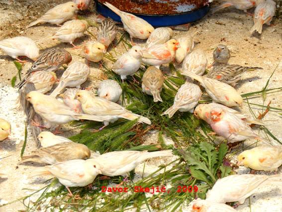 Fago_Uzgoj_2009 - Page 4 Dbk09_2009_0807_131933