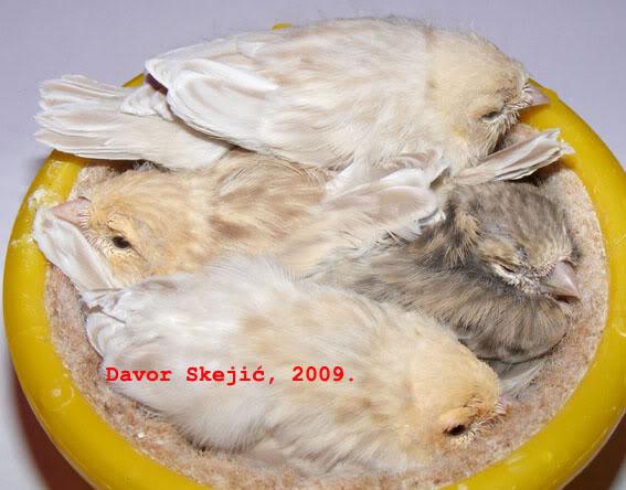 Fago_Uzgoj_2009 - Page 2 Tici_2009_0530_211338