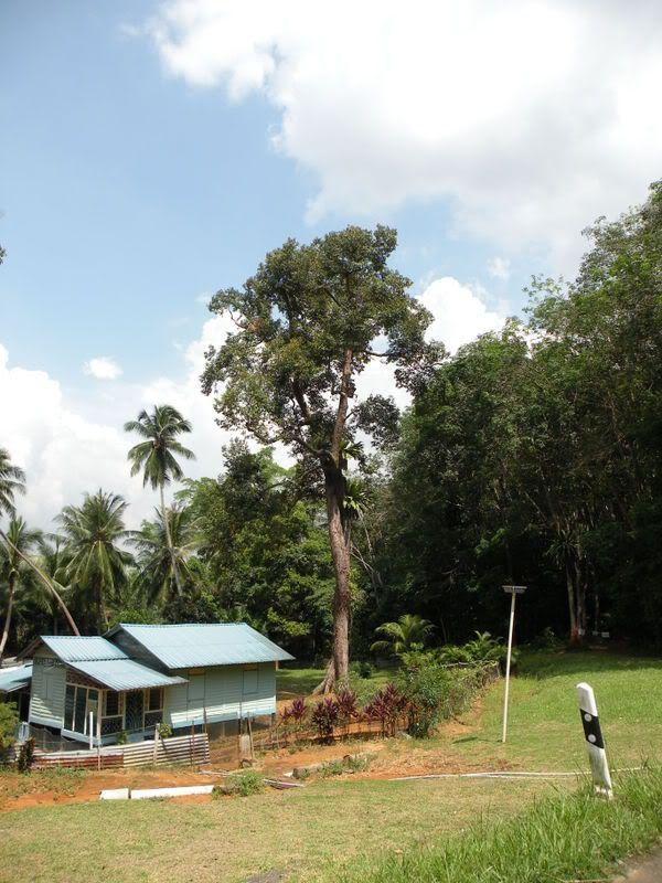 4th October 2008:  Pulau Ubin Outing DSCN0152