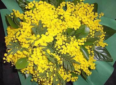 SABATO 8 MARZO SALUTIAMOCI IN QUESTA SEZIONE Bouquet-mimose