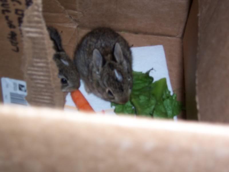 Bunny Rabbits 100_5068