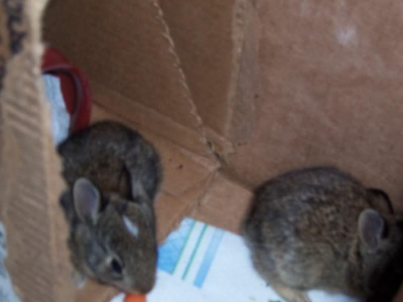 Bunny Rabbits 100_5069