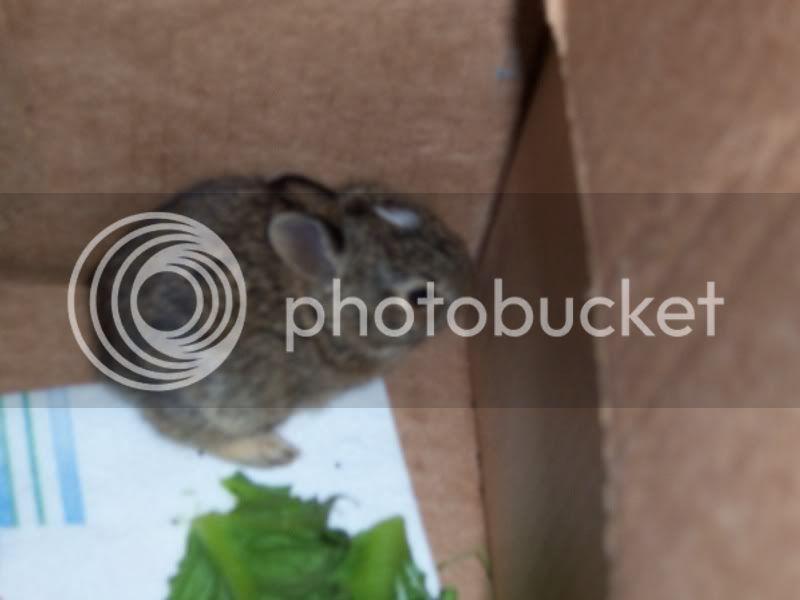 Bunny Rabbits 100_5071