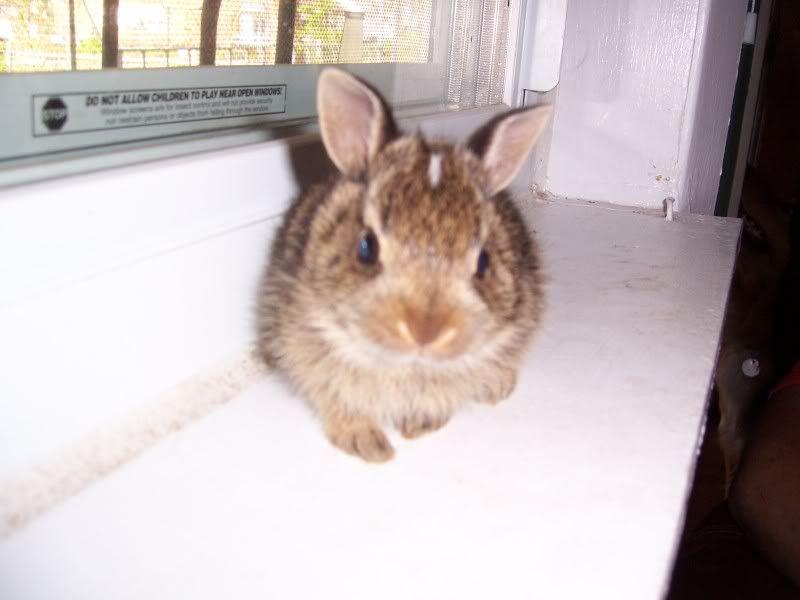 Bunny Rabbits 100_5073