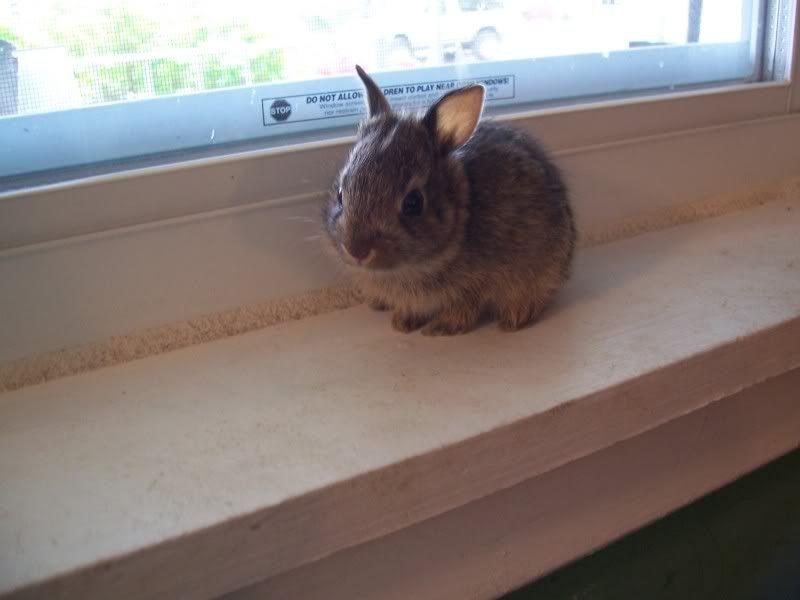 Bunny Rabbits 100_5080