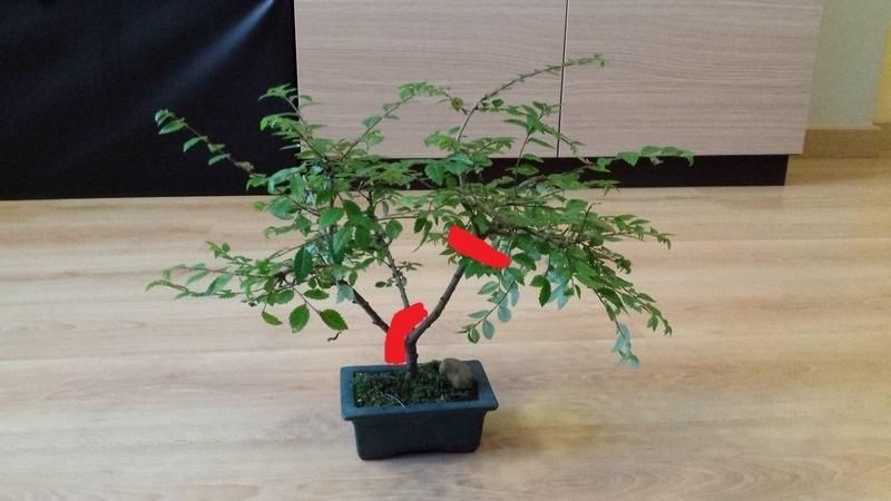 Ayuda con este bonsai 20160612_154021_zpsnuhrrwnx