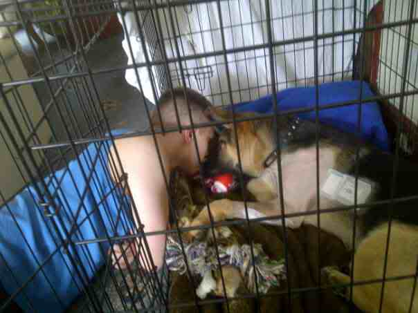 Hello from Sussex German Shepherd Rescue - Page 2 Rx3