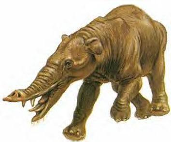 Elefantes Prehistóricos Phiomia