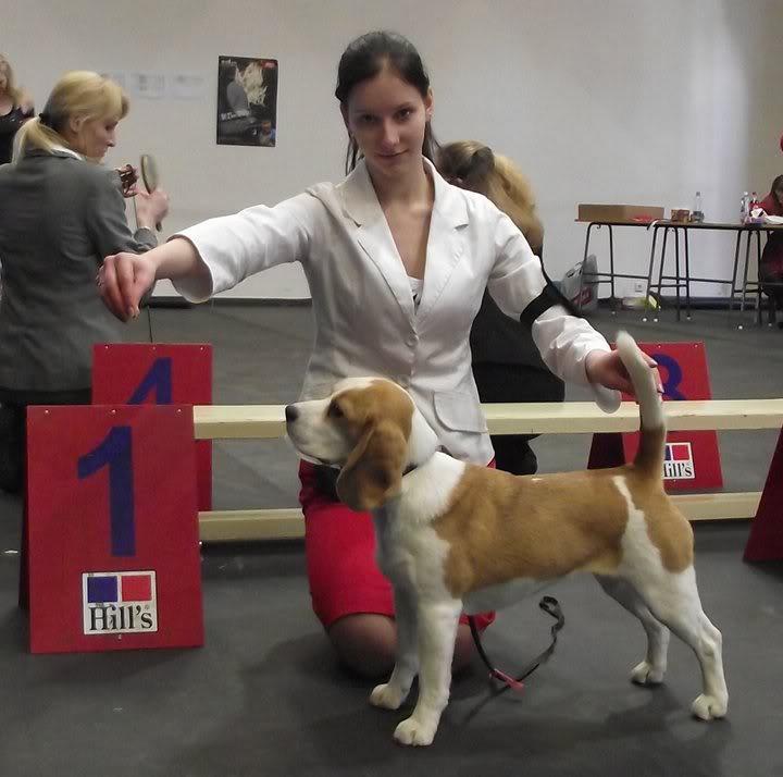 Priprema psa za izlozbu 930120_orig