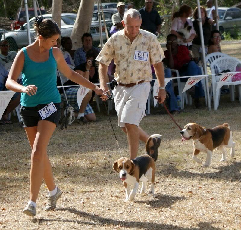 Priprema psa za izlozbu Beagles_March