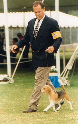 Priprema psa za izlozbu Robandsam
