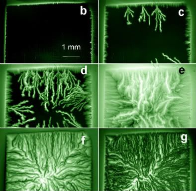 Dendritic flux avalanches in superconductors  Grass