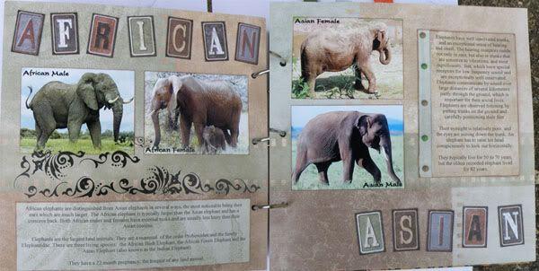Helen's Favourite wild animals CJ Lorrainespages