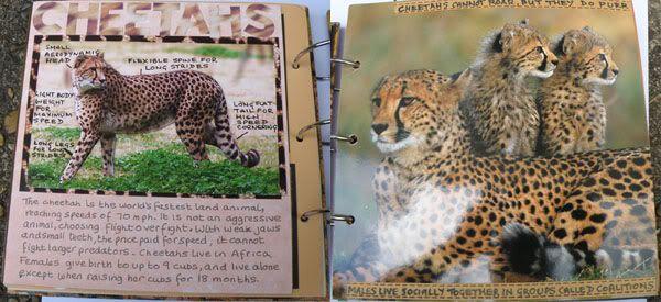 Helen's Favourite wild animals CJ Stephspages