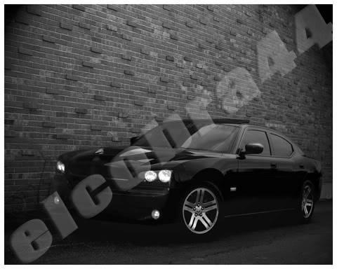 El Cobra Photo Prints for sale! Wall1BWS