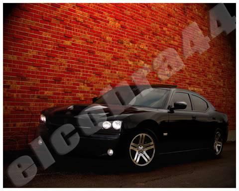 El Cobra Photo Prints for sale! Wall1S