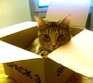 Animals Catinabox