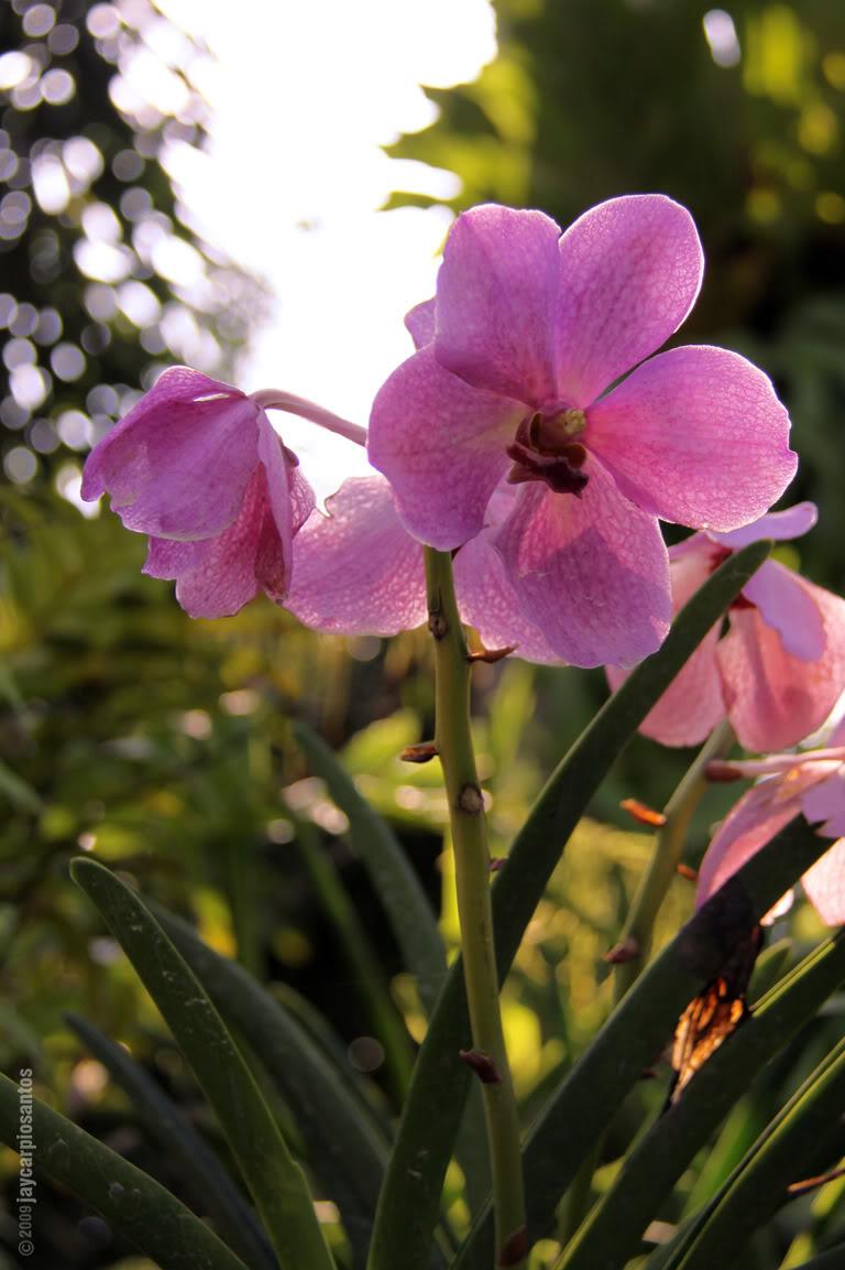 Pixelarch Monthly Challenge Flower2