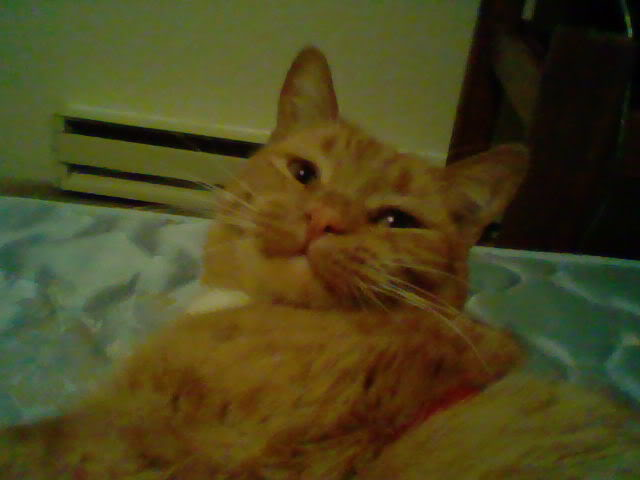 Post photos of your pets! HNI_0004