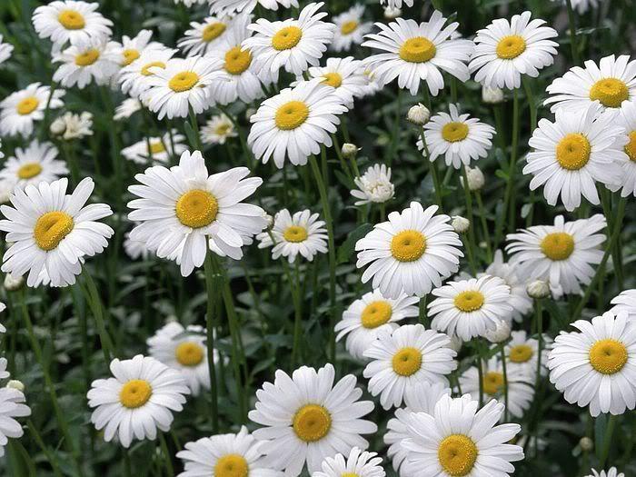 Quali sono i vostri fiori o piante preferite? 47_93001_3fcfda8f795f548