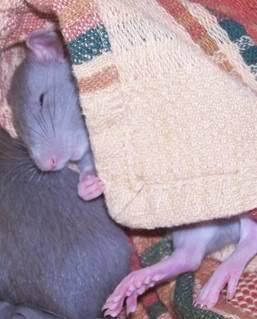 Some of my favorite pics of the boys... SleepyBrie-1
