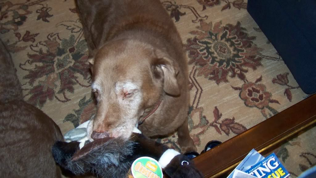 Here is Buddy 100_0282