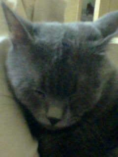 القط الازرق NONO2