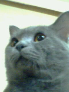 القط الازرق Nonayte