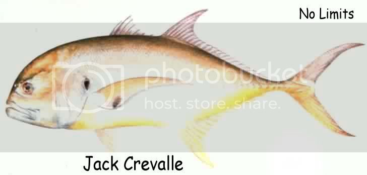 Jack Crevalle Pictures, Images and Photos