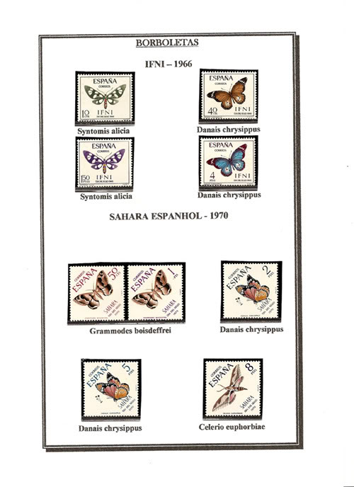 Ma Collection de Papillons Borb06