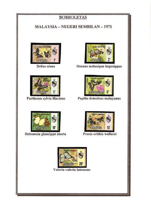 Ma Collection de Papillons Borb12