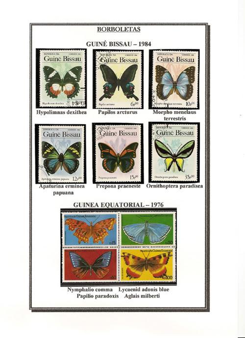 Ma Collection de Papillons Borb23