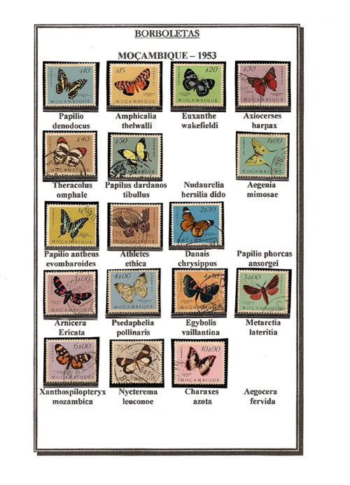 Ma Collection de Papillons Borb32