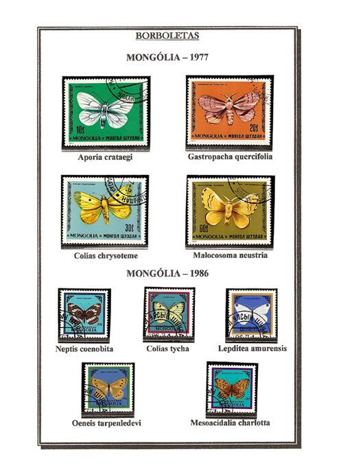 Ma Collection de Papillons Borb38