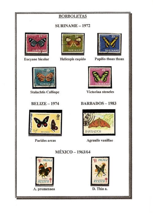 Ma Collection de Papillons Borb48