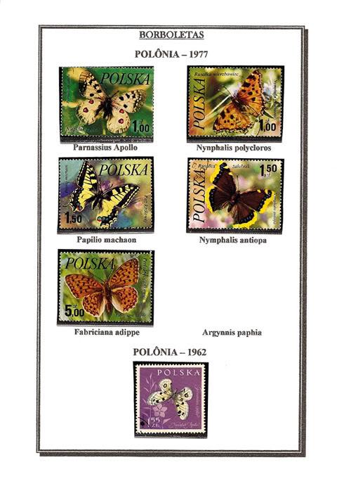 Ma Collection de Papillons Borb60