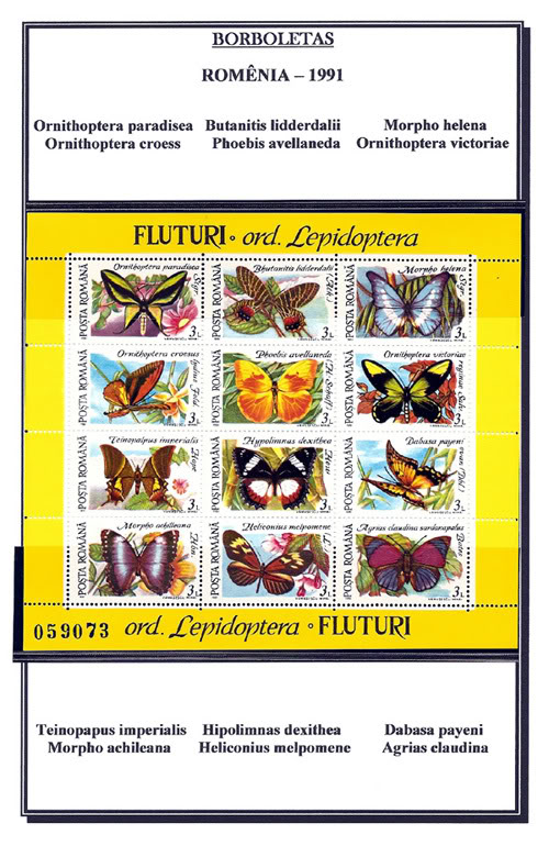 Ma Collection de Papillons Borb73