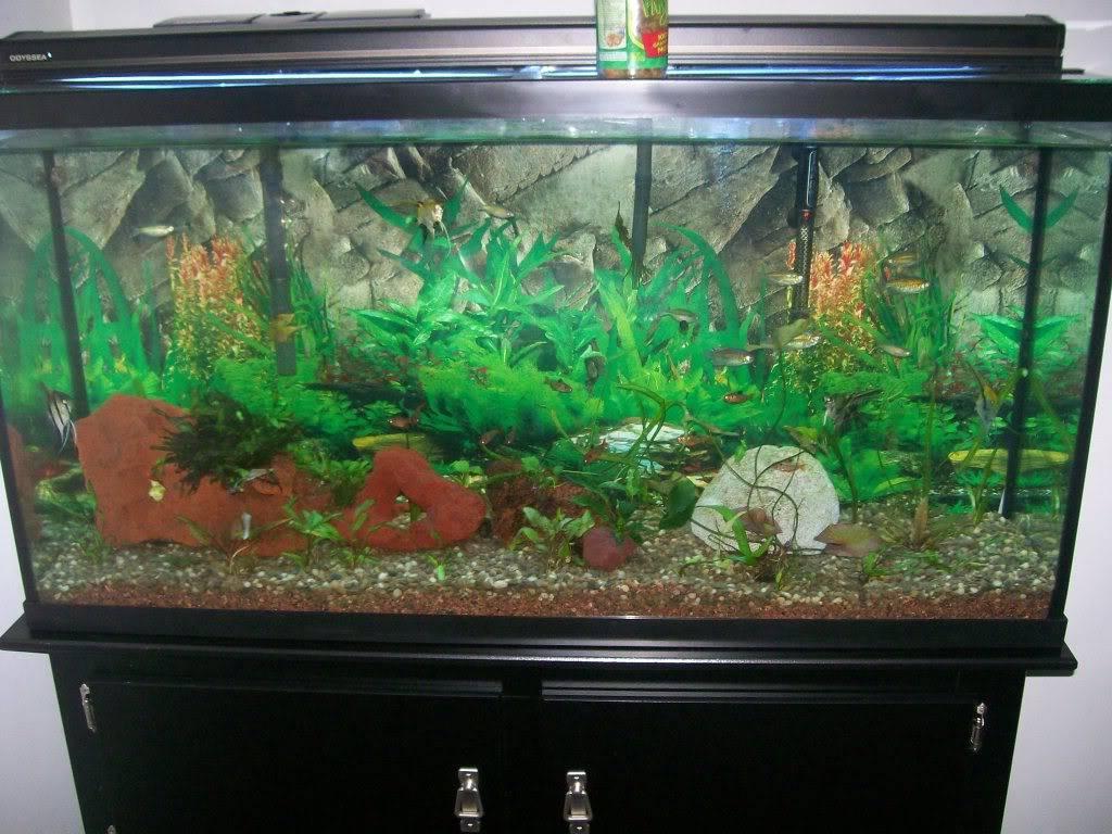 Angel fish tank Fishtank002