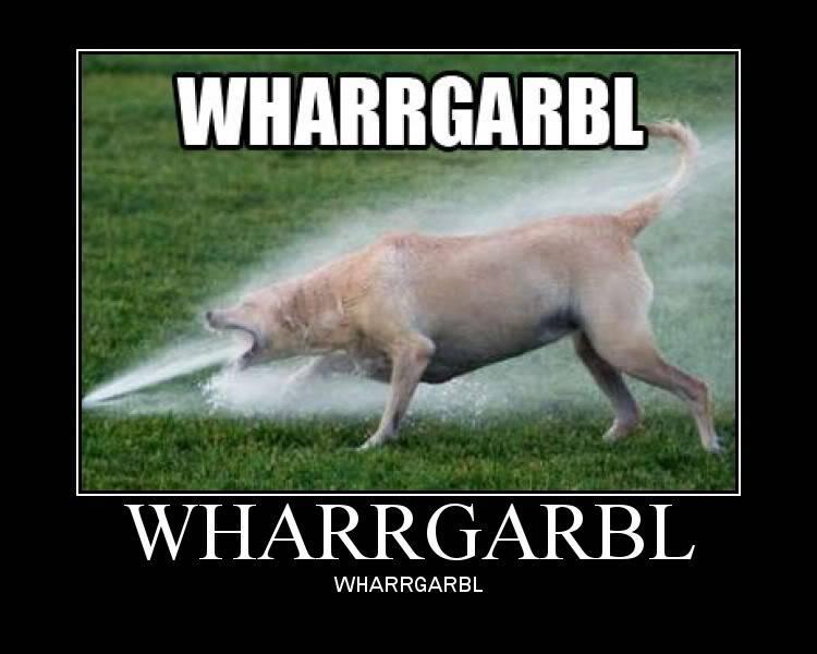 The funniest test ever DogSprinkler