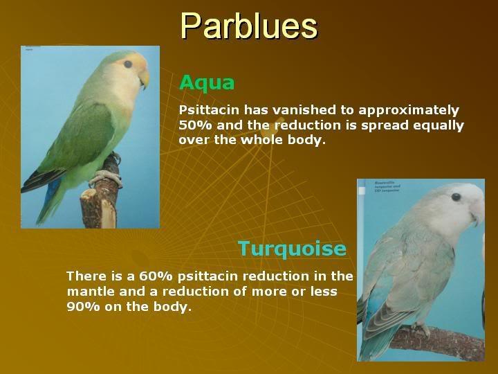 ALBS 1 (Non Eyering) Topics Post nyo dito - Page 2 Parblue