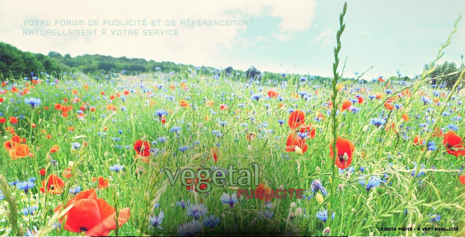 Vegetal Publicité
