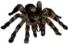 ALGUNOS OTROS TIPOS DE ZOMBIE. Re_spider