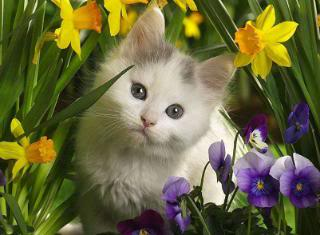 Animals - Page 2 1287823841wcSkJXY