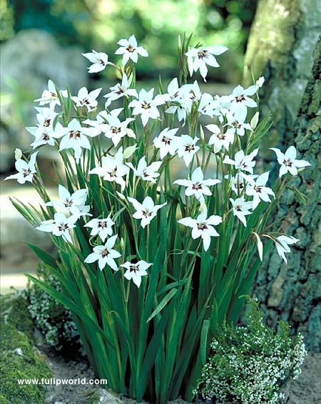 Hoa theo tháng sinh (Theo lịch phương Tây) 690375E